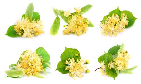 Set van linden bloemen op een witte achtergrond Stockfoto