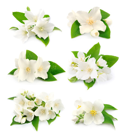 Set of white flowers of jasmine on the white  Stock Photo