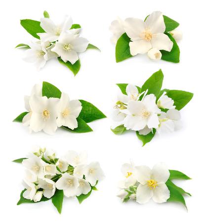 Set van witte bloemen van jasmijn op het wit Stockfoto
