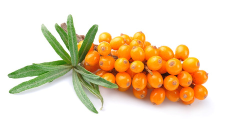 Sea buckthorn berries branch on a white background
