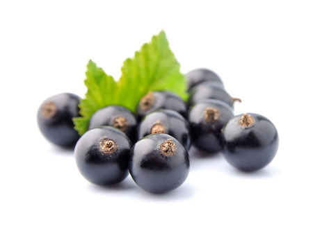 currant: Black currant with leafs on white  Stock Photo