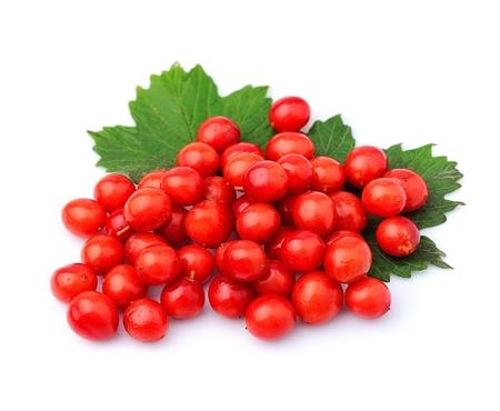 noun: Viburnum berries with leaves closeup.