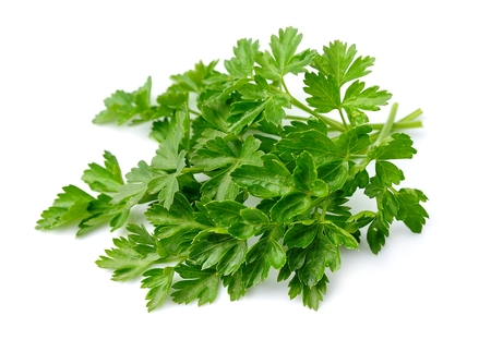 plant antioxidants: Sweet parsley herbs close up on white