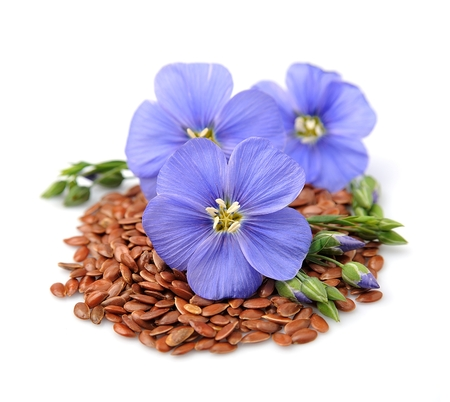 linseed: Flax seeds with flowers close up on white