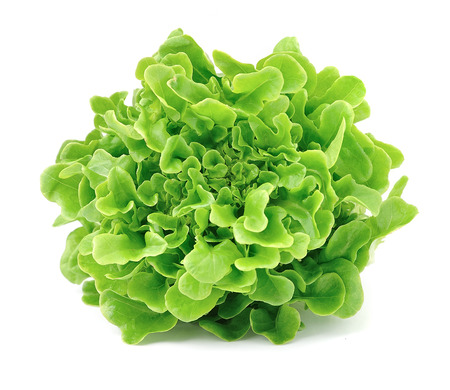 Lettuce isolated on white background .Salad leafs
