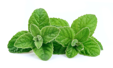 Mint leaves close up on white