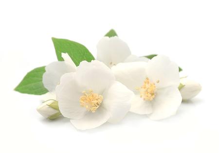 Jasmin bloemen close-up op een witte achtergrond Stockfoto