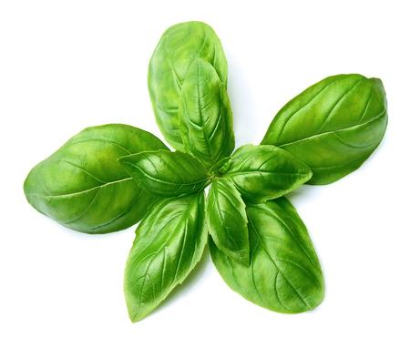 basils: Fresh basil leaves isolated on white background