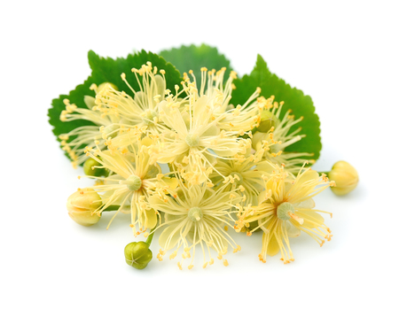 linden flowers: Linden flowers on a white background