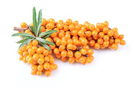 buckthorn: Sea buckthorn berries branch on a white background