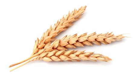 espiga de trigo: Trigo aislado en blanco de cerca Foto de archivo