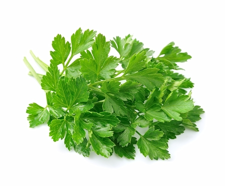 plant antioxidants: Parsley herbs close up on white
