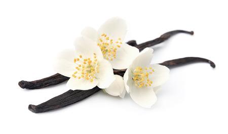 vanilla flower: Vanilla sticks with flowers on white backgrounds.
