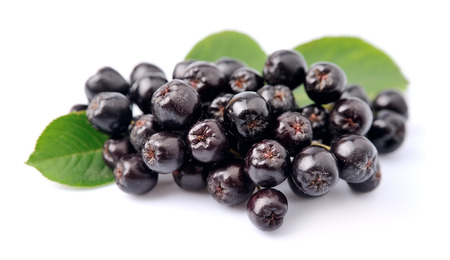 Black chokeberry with leaves close up. Black aronia berries.