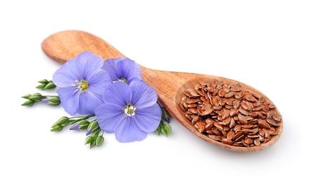 Leinsamen und Blumen Flachs Nahaufnahme auf weißem Standard-Bild - 53424317