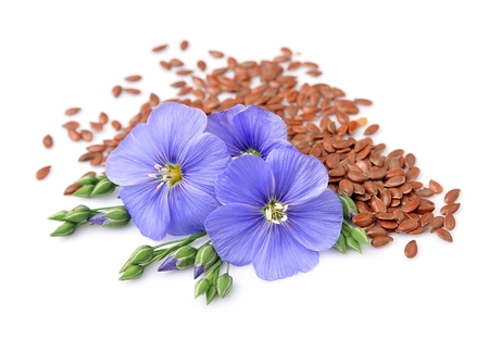semen: Flax seeds with flowers close up on white.