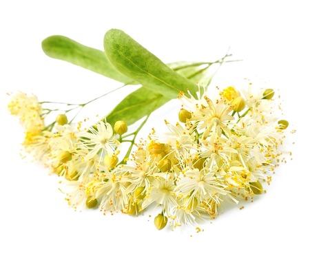 Tea tree: linden flowers on a white background Stock Photo