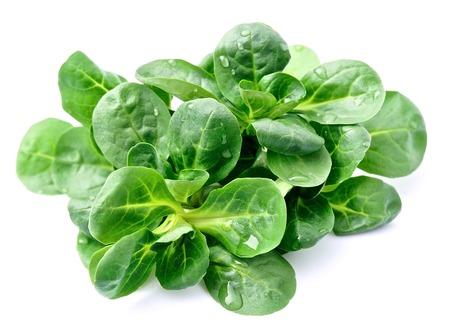 Valerianella locusta,corn salad,lamb's lettuce Standard-Bild