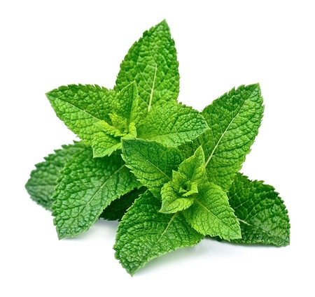 Mint leaf close up on a white background Stock fotó - 63717883