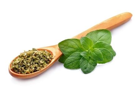 spice: Fresh oregano herbs .Dried spice of oregano herbs.