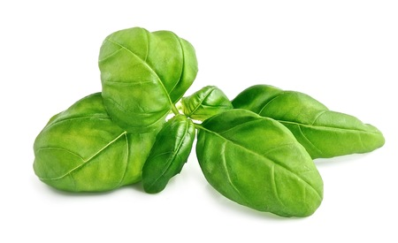 aromatic: Fresh basil leaves isolated on white background