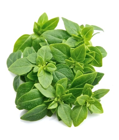 albahaca: Basil leaves isolated close up on white backgrounds.