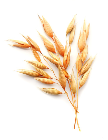 Oat plant isolated on white close up .