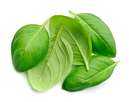 Fresh basil leaves isolated on white background . Stock Photo