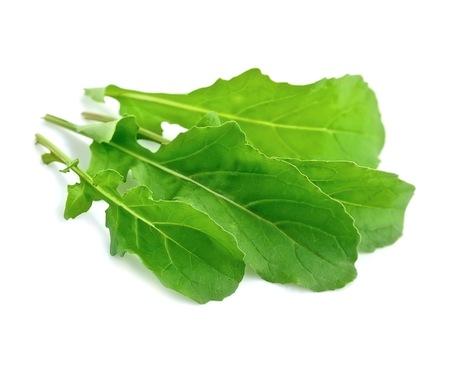 Arugula salad isolated white close up Foto de archivo