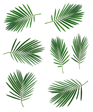 Set of coconut leaf on white backgrounds. Tropical leaves. Stock Photo