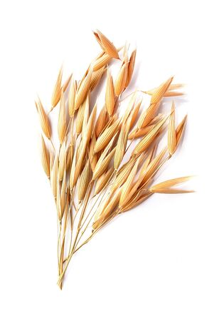 Oat isolated on white backgrounds.
