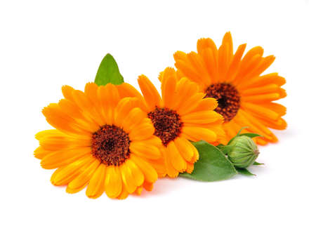 Marigold flower on white backgrounds. Stock Photo