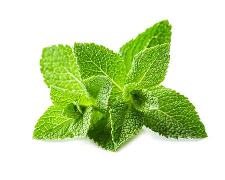 Fresh green mint on white backgrounds. Archivio Fotografico