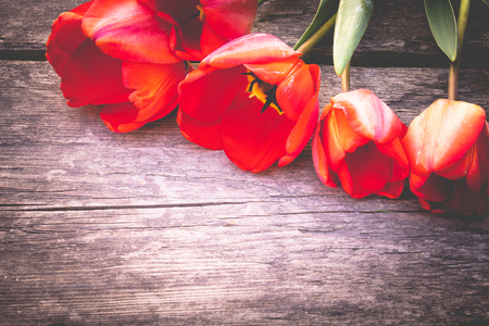 A bouquet of red tulips on the background of wooden, old boards. Place for text. The concept of spring has come. View from above. Banner March 8, Easter