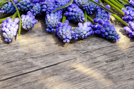 A bouquet of blue flowers Muscari on old, wooden boards, bells. View from above. Place for text. 免版税图像