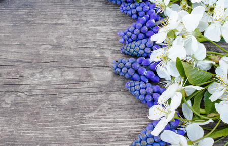 A bouquet of blue bells on old, wooden boards, with white flowers of cherry, bluebells. View from above. Place for text. 版權商用圖片