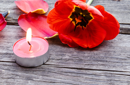 A red, burning candle is burning near the fallen petals of red tulips. The red candle is burning on the table.