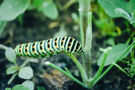 Green caterpillar on the grass. Close-up.