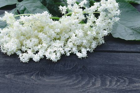 White elderberry flowers and leaves from the garden on a rustic wooden background. There is a place for your text. Copy space