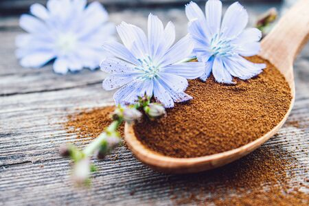 Blue chicory flower and a wooden spoon of chicory powder on an old wooden table. Chicory powder. The concept of healthy diet drink. Coffee substitute.