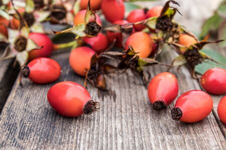 A lot of fresh rose hips on a wooden table. Close-up.