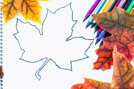 Colorful autumn leaves and multicolored pencils near white paper with place for text. Background with autumn leaves. Copy space for inscription. School concept.