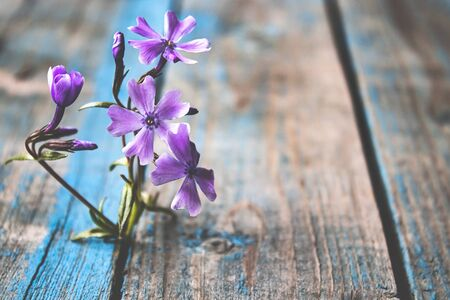 Closeup of a blue flower on the boards. The concept of loneliness and sadness. Stock Photo