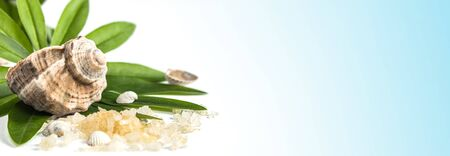 Spa banner concept of beauty treatments and procedures. Sea salt and sea shells on green leaves on a blue background. Copyspase flatlay Stok Fotoğraf