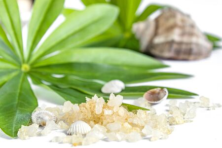 Spa concept of beauty treatments and procedures. Sea salt close-up and sea shells on green leaves on a white background. Copyspase flatlay