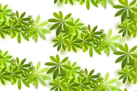 Seamless pattern with green natural leaves on white background, photo collage for floral print Banque d'images