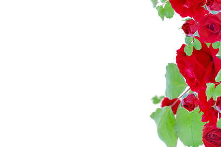 Red roses on a white background. Mother's day, valentine's day, birthday celebration concept. Card. Copy space for text