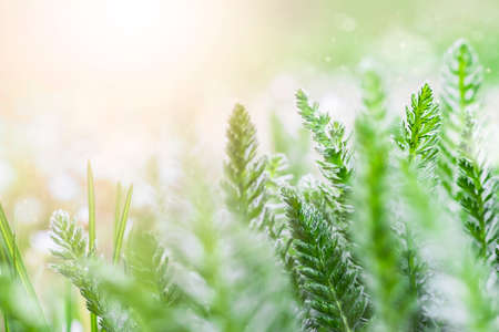 Green grass on a meadow in the morning light in spring or summer outdoors close-up. An image of purity and freshness of nature.