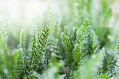 Spring background or summer background with fresh grass and sunbeams. An image of purity and freshness of nature.