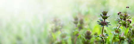Spring or summer floral background. Wildflowers in the rays of the sun in the meadow. Soft focus.